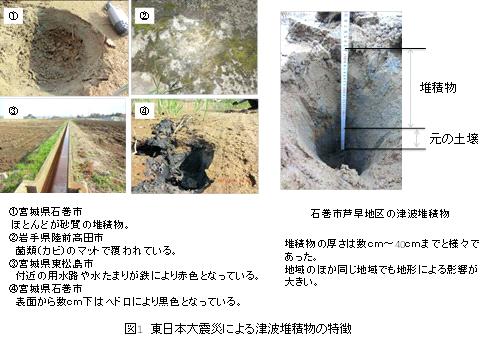 津波堆積物中に含まれる有害重金属類とそのリスク 地圏環境 ...